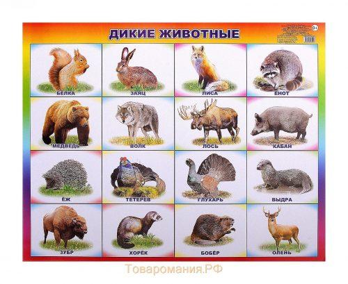 картинки диких животных2