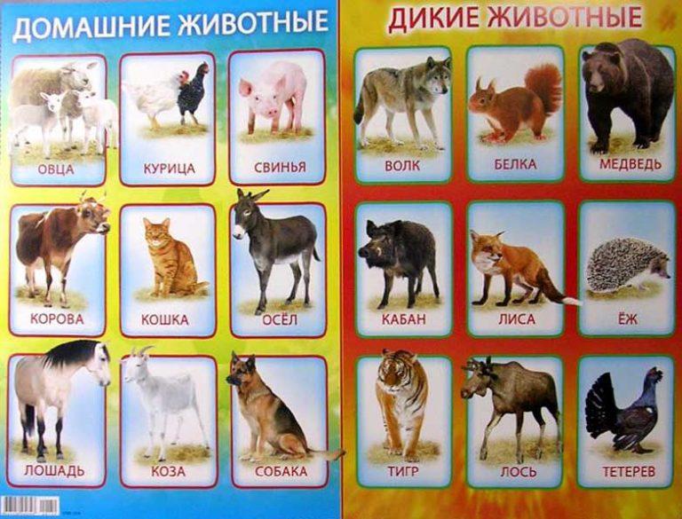 Дикие и домашние животные картинки для детей карточки распечатать