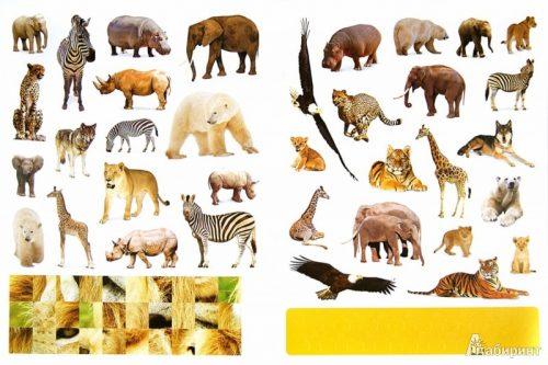 картинки диких животных4