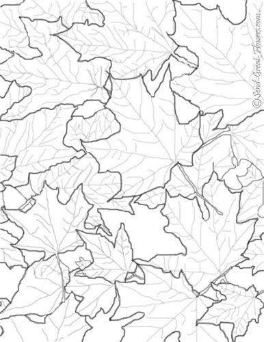 листья раскраска5