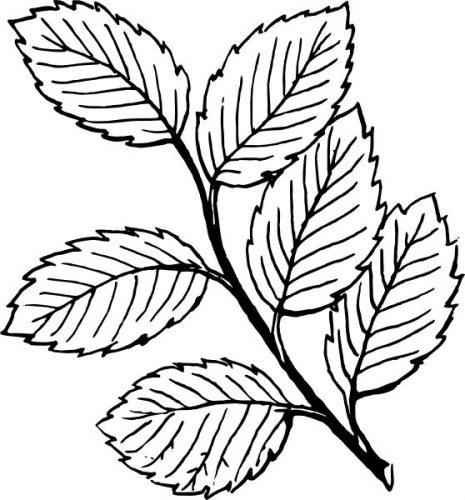 листья деревьев разукрашка