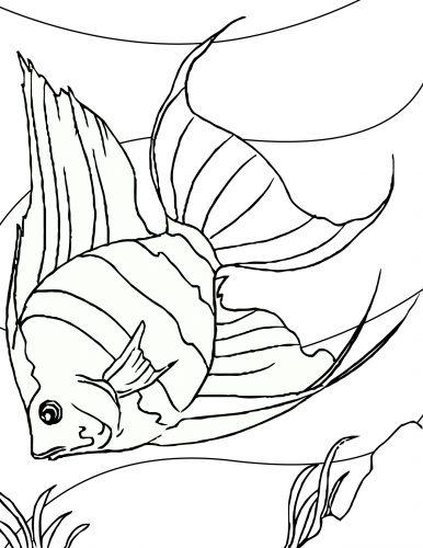 раскраска аквариум с рыбами