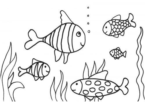 раскраска рыбы3