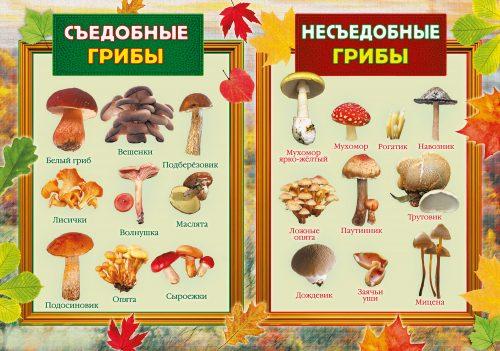 грибы картинки для детей