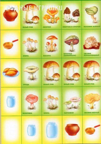 картинки грибов с названиями2