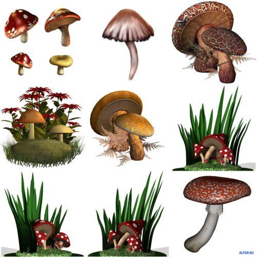 картинки грибов с названиями4