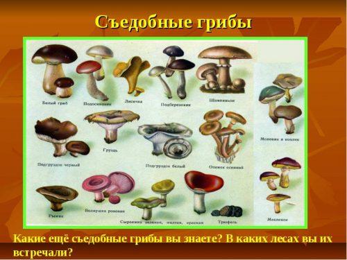 картинки грибов с названиями5