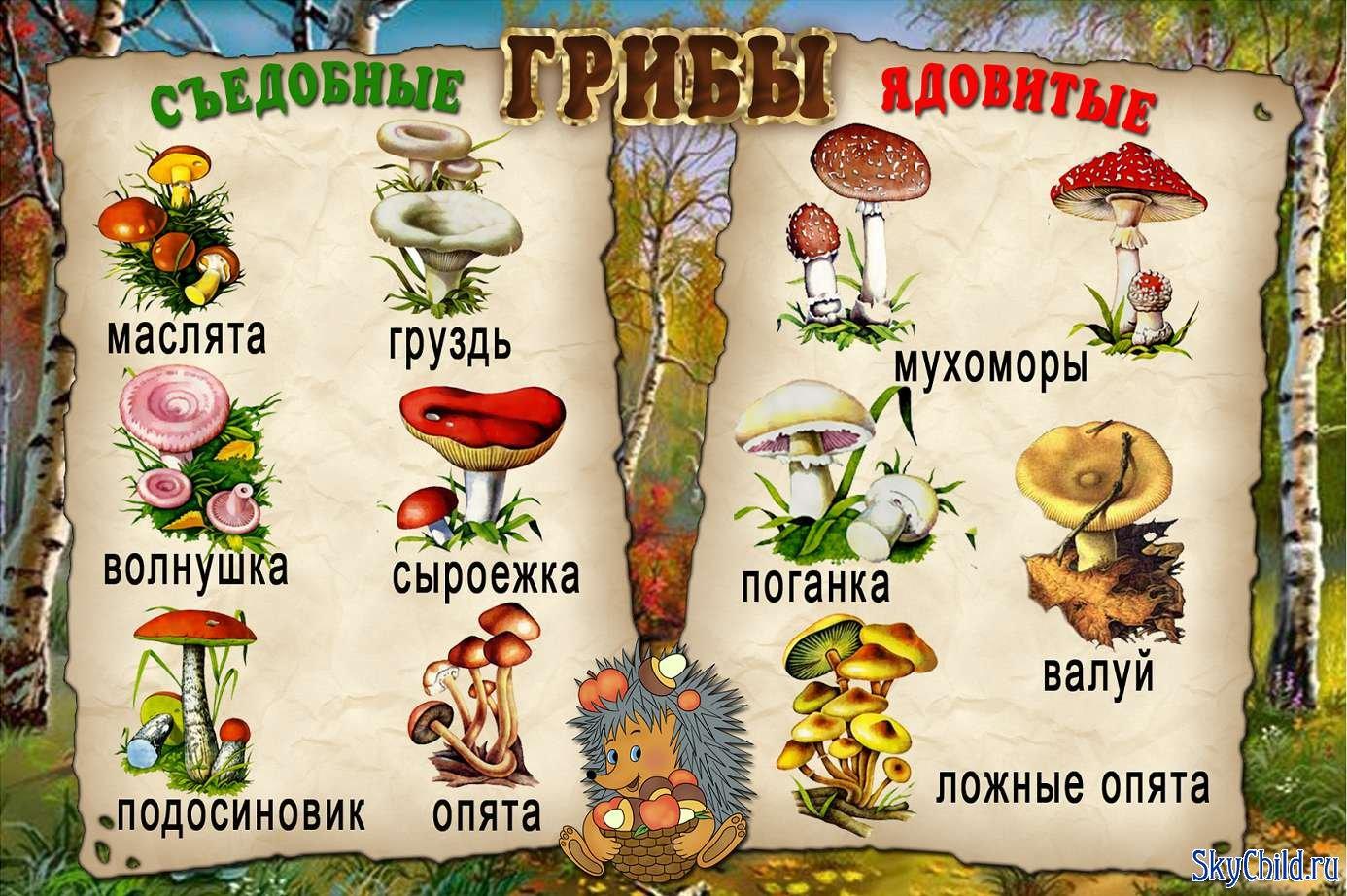 Съедобные грибы  Описание грибов  Грибные блюда