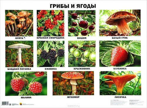 грибы картинки для детей3