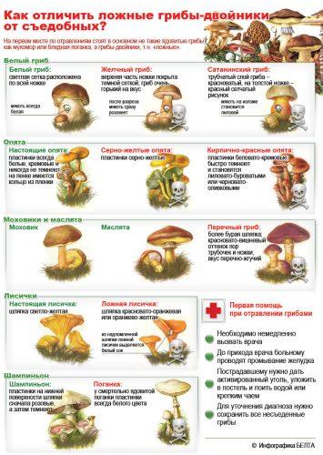 грибы картинки для детей4