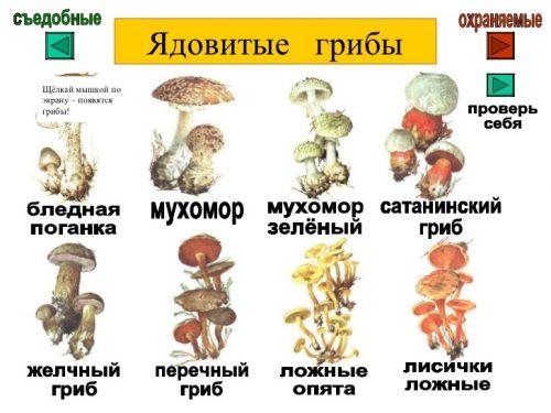 ядовитые грибы картинки для детей