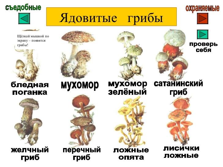 картинки для детей съедобные и несъедобные грибы