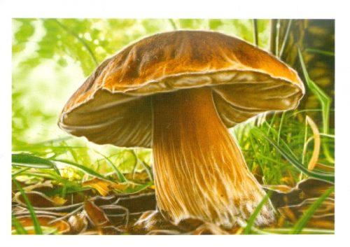 белый гриб картинка