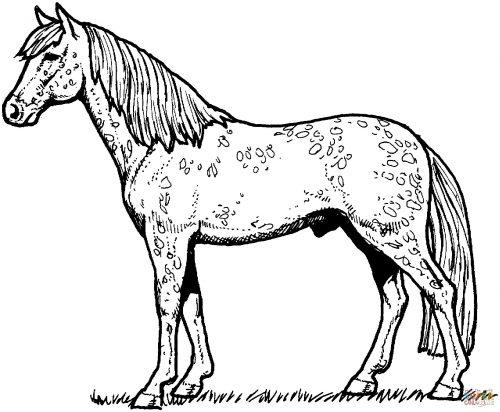 раскраска лошадка11