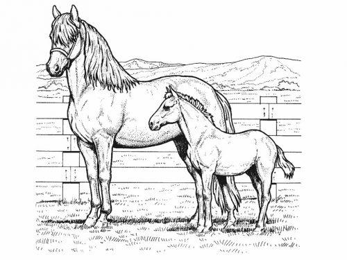раскраска лошадка14