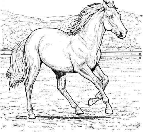 раскраска лошадка2
