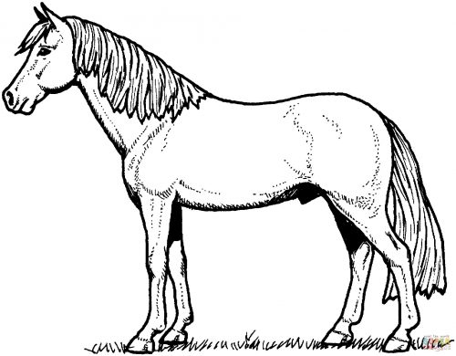 раскраска лошадка4