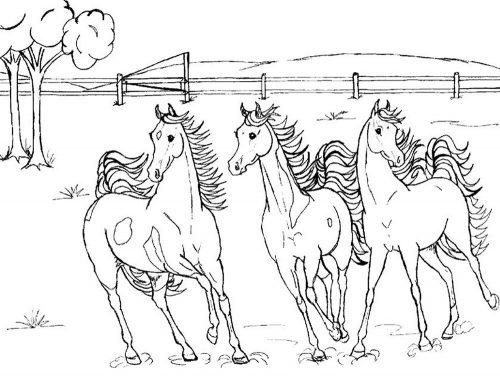 раскраска лошадка6