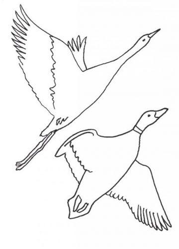 перелетные птицы раскраска3