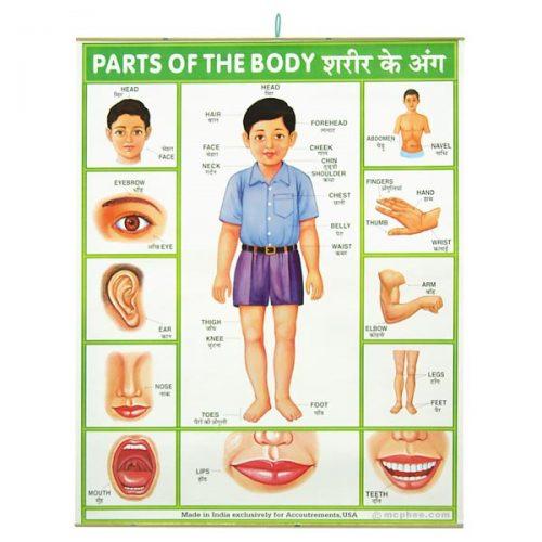 части тела человека на английском языке2
