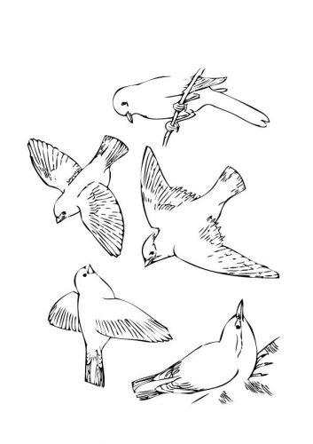 перелетные птицы раскраска4