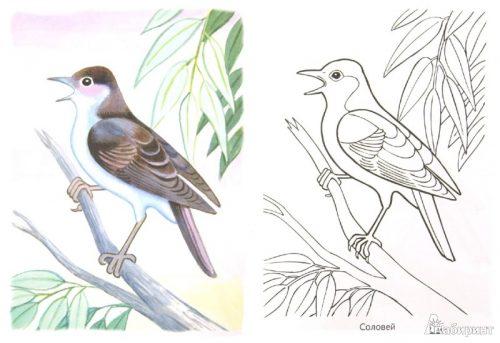 перелетные птицы раскраска5
