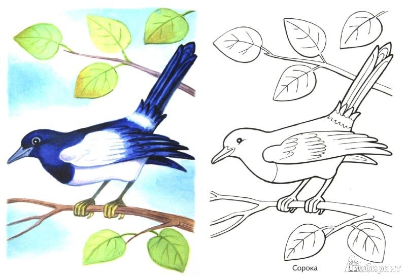 картинки для детей птицы раскраски