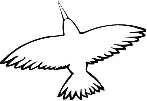 перелетные птицы раскраска11