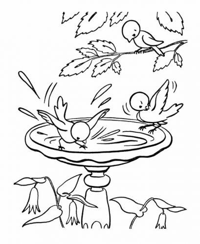 птицы весной раскраска3
