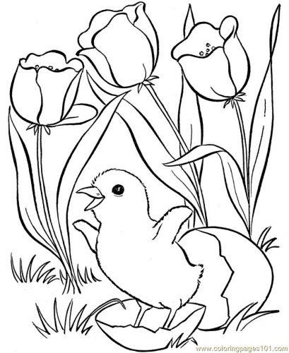 птицы весной раскраска5