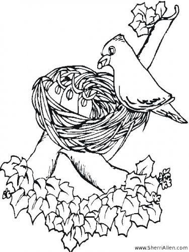 птицы весной раскраска7