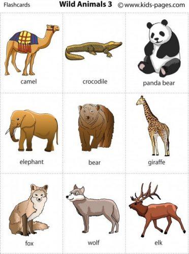 дикий мир животных4