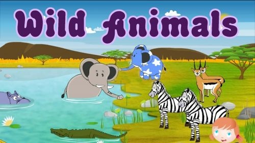 дикие животные для детей4