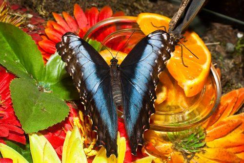 парк бабочек екатеринбург1