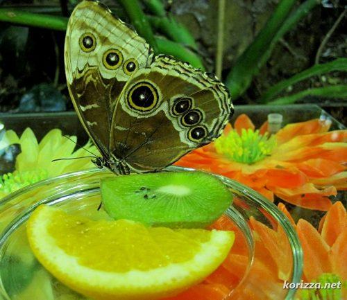 парк бабочек екатеринбург3