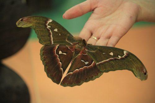 парк бабочек красноярск2