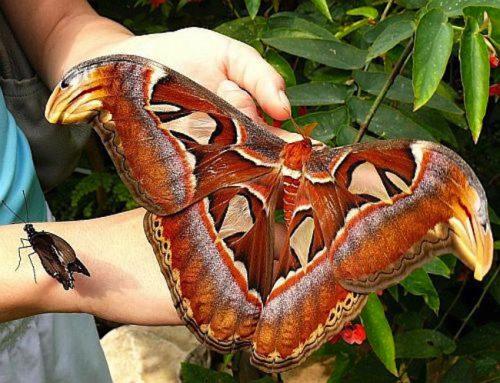 парк бабочек новосибирск2