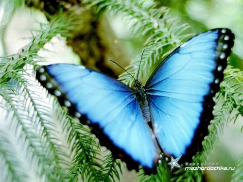 парк бабочек новосибирск4