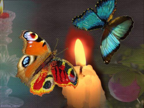 парк бабочек новосибирск5