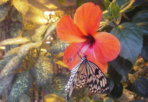 парк бабочек пермь
