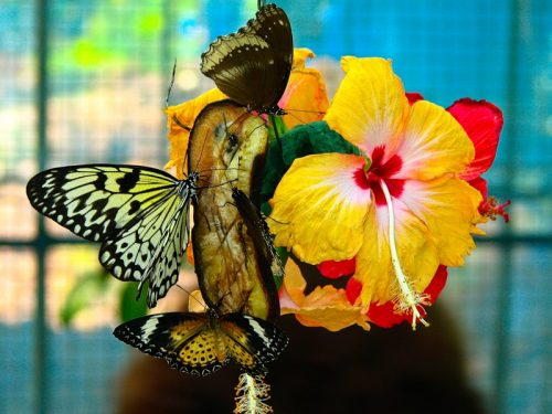 парк бабочек ростов на дону