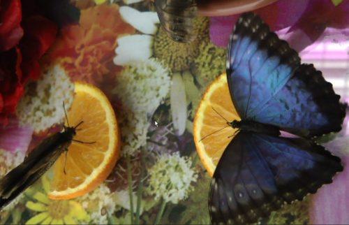 парк бабочек ростов на дону2