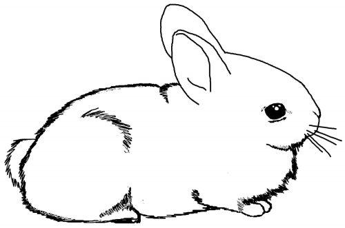 раскраска заяц8