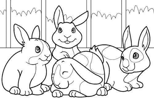 раскраска зайцы