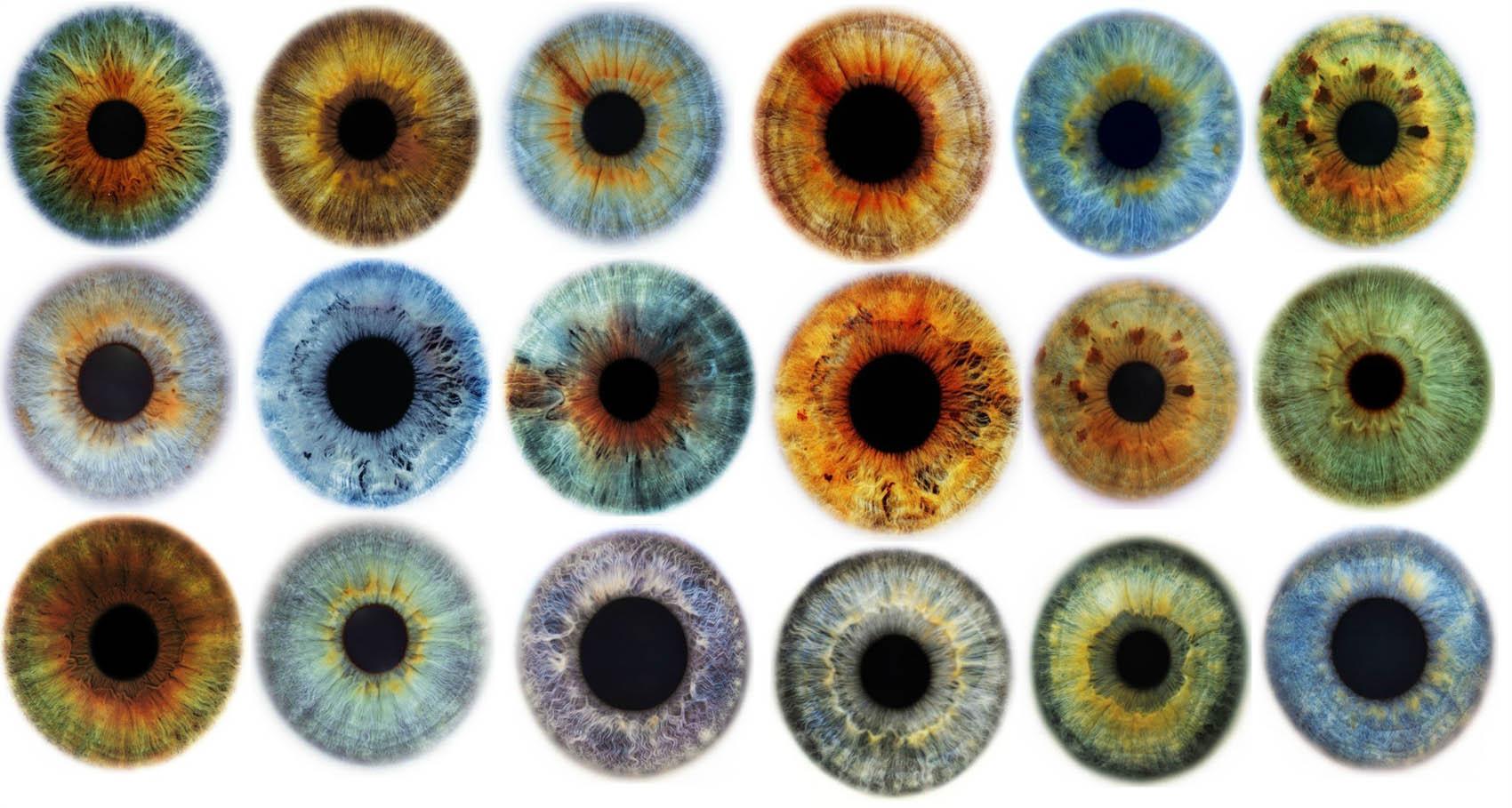 радужные оболочки глаз