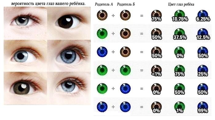 таблица цвета глаз ребенка по цвету глаз родиелей