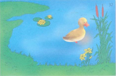 картинка с предлогом пруд 1
