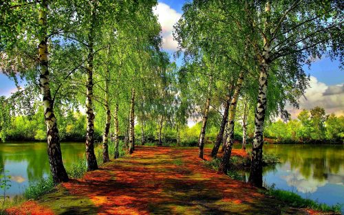 Красивый лес картинка