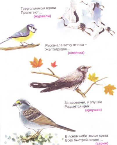 Загадки про птиц картинка