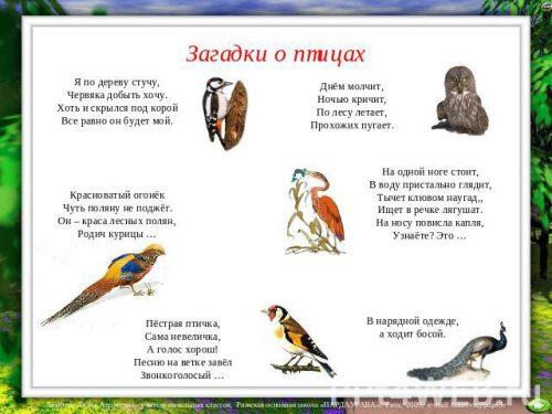 Загадки про птиц2